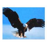 Kahler Amerikaner Eagle Postkarte