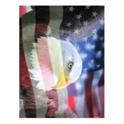 Kahler amerikanischer Adler u. USA-Flagge Postkarten