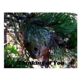 Kahles Gesichts-Hornissen-Nest Postkarte