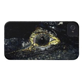 Kaiman-Krokodil mustert Reptil-Schwarz-Beere iPhone 4 Hüllen