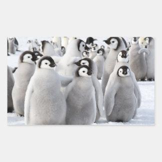 Kaiser-Pinguin-Küken - Aufkleber