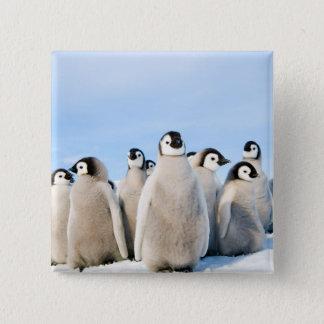 Kaiser-Pinguin-Küken - Knopf Quadratischer Button 5,1 Cm