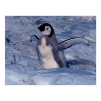 Kaiser-Pinguin-Küken Postkarte