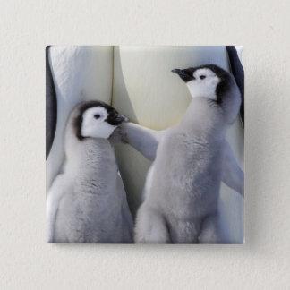 Kaiser-Pinguin-Küken Quadratischer Button 5,1 Cm