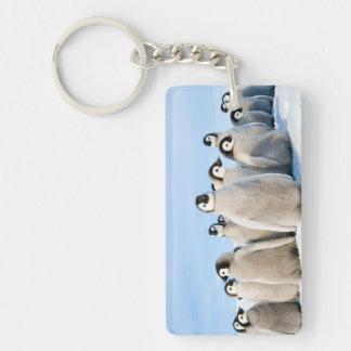 Kaiser-Pinguin-Küken - Schlüsselring
