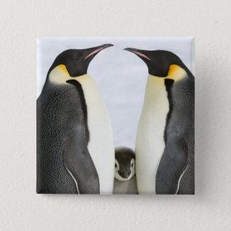 Kaiser-Pinguine mit Küken - Knopf Quadratischer Button 5,1 Cm