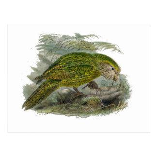 Kakapo-grüner Papageien-Vintage Illustration Postkarte