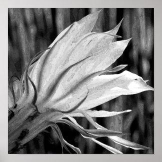 Kaktus-Blume Plakatdrucke