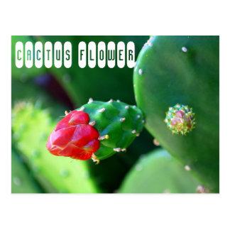 Kaktus-Blume Postkarte