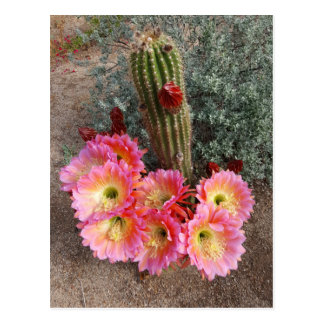 Kaktus-Blumen-Postkarte Postkarte