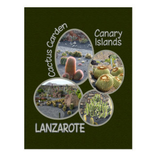Kaktus-Gartenpostkarte Postkarte