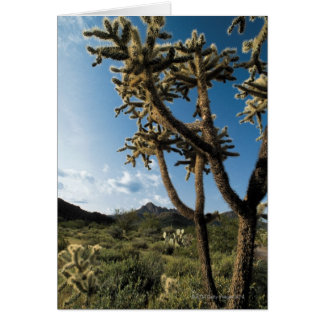 Kaktus im Saguaro-Nationalpark, Arizona Karte