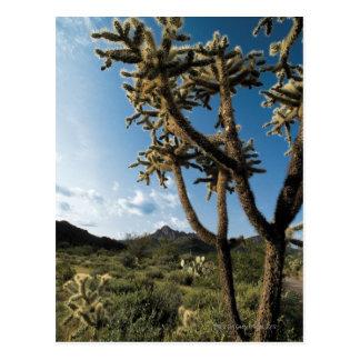 Kaktus im Saguaro-Nationalpark, Arizona Postkarte