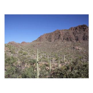 Kaktus-Landschaft Postkarte