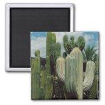 Kaktus-Magnet Kühlschrankmagnete
