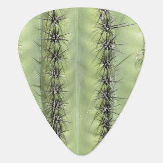 Kaktus-Nahaufnahme Plektron