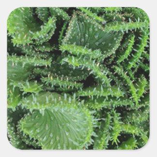 Kaktus Quadratischer Aufkleber