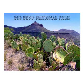 Kaktusfeige-Kaktus-große Biegung Postkarte