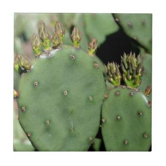 Kaktusfeige-Kaktus-Natur Kleine Quadratische Fliese