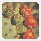Kaktusfeigekaktus in der Blüte, Arizona-Sonora 2 Quadratischer Aufkleber