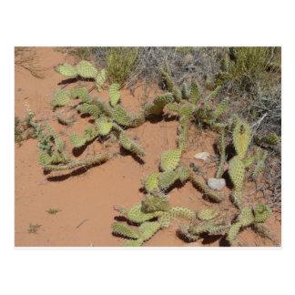 Kaktusfeigekaktus Postkarte