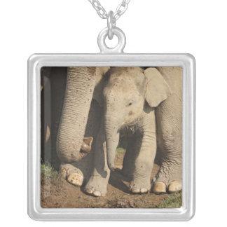 Kalb des indischen Elefanten, Corbett Versilberte Kette