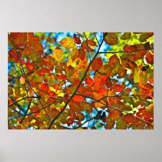 Kaleidoskop des Farbherbst-Blätter Poster