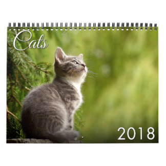 Kalender der Katzen-2018 und des Kätzchens