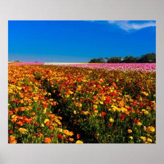 Kalifornien-Blume stellt Plakat 20X24 auf