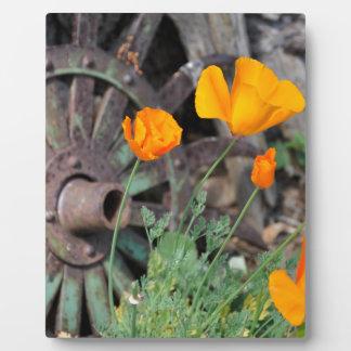 Kalifornien-Mohnblumen Fotoplatte