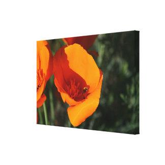 Kalifornien-Mohnblumen Leinwanddruck