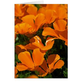 Kalifornien-Mohnblumen Notecard Karte