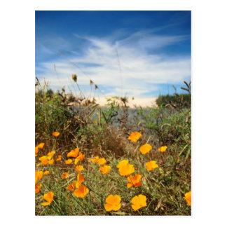 Kalifornien-Mohnblumen u. Sanddünen Postkarte