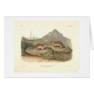 Kalifornien-Murmeltiere durch Audubon (0184A) Karte