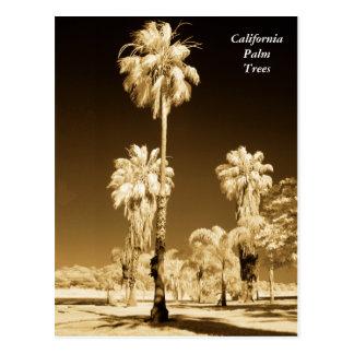 Kalifornien-Palme-Infrarot-Postkarte Postkarte