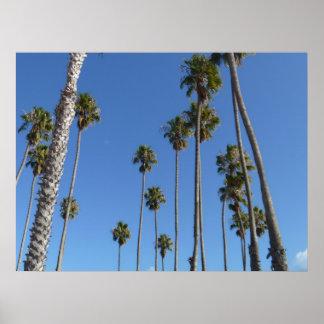 Kalifornien-Palmen Poster