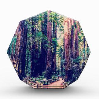 Kalifornien-Rothölzer Acryl Auszeichnung