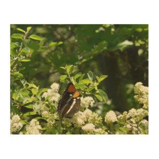Kalifornien-Schwester-Schmetterling in Yosemite Holzwanddeko