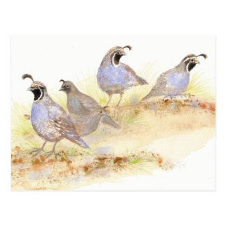 Kalifornien-Wachteln, Vögel, Natur, wild lebende Postkarte