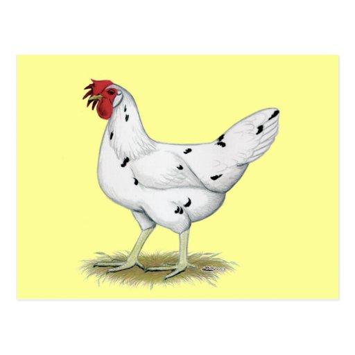 Kalifornien-Weiß-Henne Postkarte