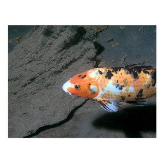 Kaliko-Fische Postkarte