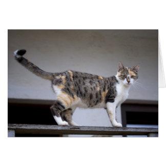 Kaliko-Katze am Balkon Karte