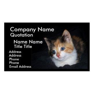 Kaliko-Katzen-Visitenkarte Visitenkarten