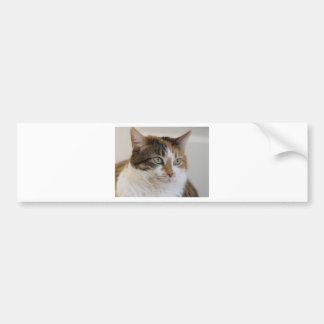 Kaliko Tabbykatzengesicht Autoaufkleber