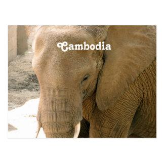 Kambodschanischer Elefant Postkarte