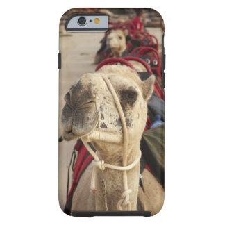 Kamel auf Kabel-Strand, Broome Tough iPhone 6 Hülle