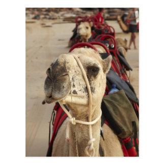 Kamel auf Kabel-Strand, Broome Postkarte