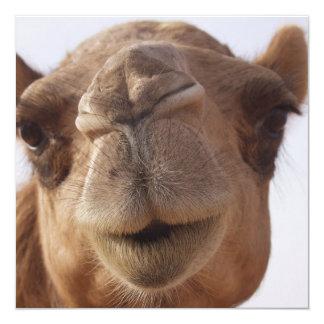 Kamel-Einladung Quadratische 13,3 Cm Einladungskarte