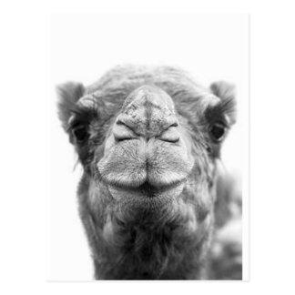 Kamel küsst Spaß-Nahaufnahme-Foto Postkarte