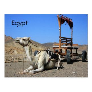 Kamel und Wagen - Ägypten-Postkarte